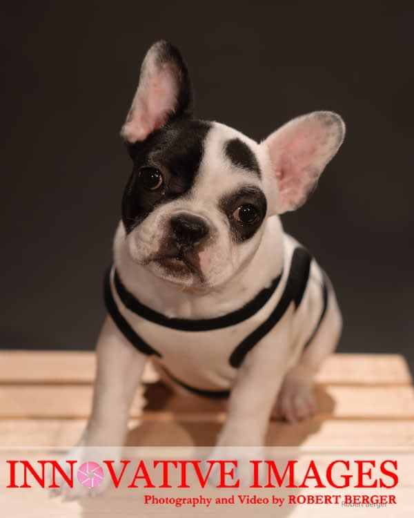 Dog_Portraits_PetPhotography_Pet_Portraits_Houston_070117